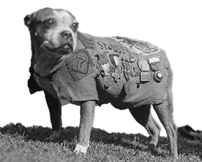 Sgt. Stubby and animals of WWI
